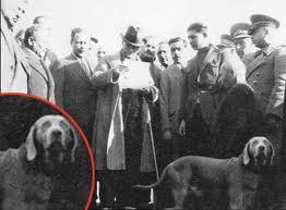 Atatürk'ün Köpeği Foks